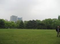 Een groot grasveld